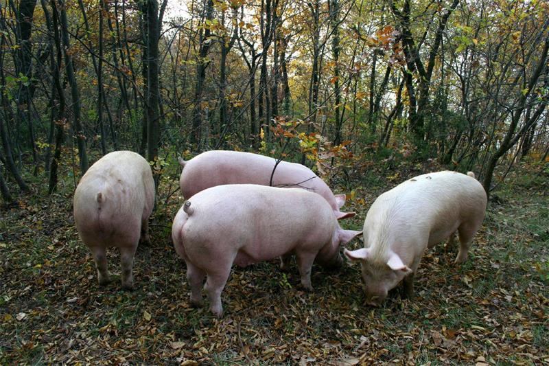Boneless raw ham aged 16 months selling typical Tuscan salami online